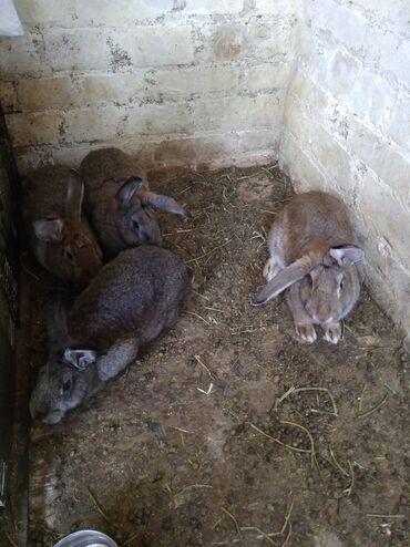 Кролики 5 месяцев