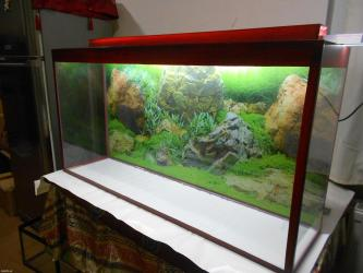 bmw-1-серия-114d-mt - Azərbaycan: Teze akvarium 125 litrelik uzunu 1 metrelik