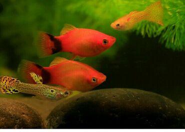 Продаю аквариум с рыбками +подарок Продаю новый 30лит аквариум с 18