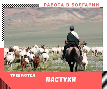 Работа Пастух в БолгарииТребования:Опыт работыуменее водить