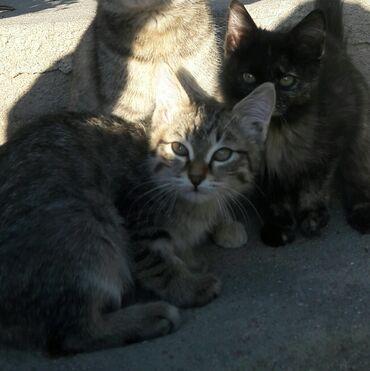 55 объявлений | ЖИВОТНЫЕ: Отдам котят в хорошие руки!