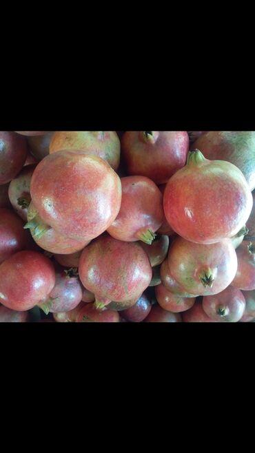Salam.Sabirabad rayonu cavad kəndində 2 tona yaxin nar satilir.kilosu