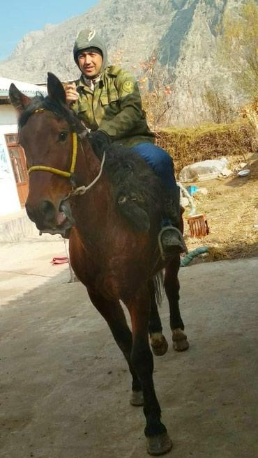 От сотилади 80 мин.ками бор в Араван