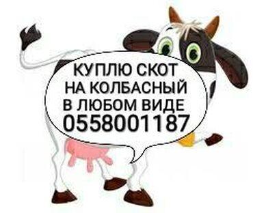 Принимаем в колбасный цех скот любой упитанности и возраста. дорого