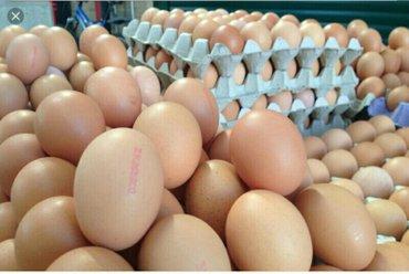 Xırdalan şəhərində Tecilli yumurta qablawdirma iwciller teleb olunur