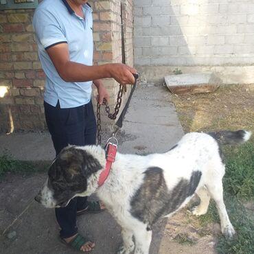 Животные - Дмитриевка: Собаки