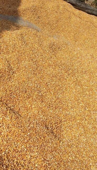 Кукуруза сорт Майами (кормовая)  Влажность -14%  В наличии свыше 2000