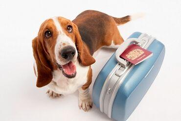 Нужна перевозка собаки собака хаски едет тихо добрый спутник над