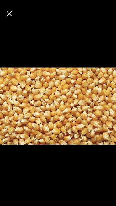186 объявлений | ЖИВОТНЫЕ: Продаётся кукуруза ( рушенная ) Ладожская 18 сом