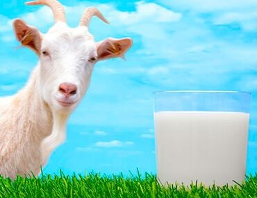 Домашнее козье молоко.(Воронцовка)