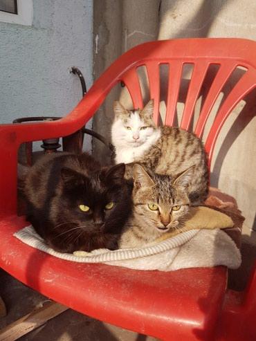 Отдаем котят в добрые руки.очень в Бишкек