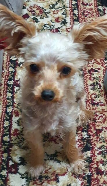 Пропала собака в районе улицы Стаханова/ старый магазин Океан