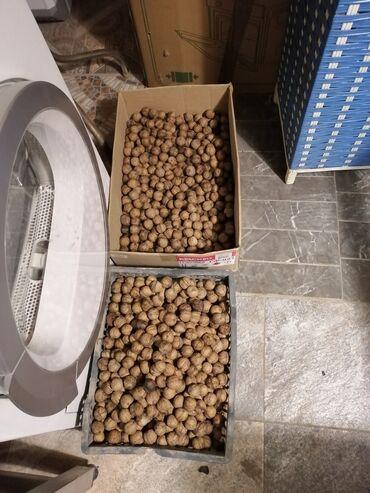сухой лед бишкек in Кыргызстан | ОСВЕТИТЕЛЬНЫЕ ПРИБОРЫ: Продам Грецкий орех, тонкая скорлупа (тонкокорый). Высушенный