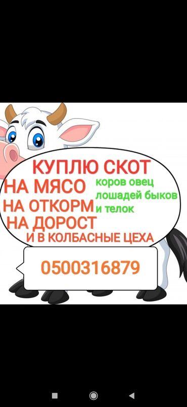 сумки для роддома купить в Кыргызстан: Куплю коров лошадей быков тёлок на забой