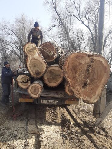 купить кувшинки для пруда в Кыргызстан: Куплю карагач и тополь по хорошей цене опытные пилшики