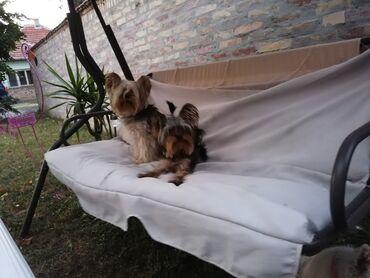 Zrenjanin - Srbija: Pansion za pse i mačke u Zrenjaninu. Obezbeđeno veliko dvorište, boks