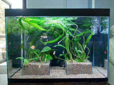 Продаю аквариумы цена за комплект рыбки корма комплектующие