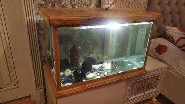 balıq ovu - Azərbaycan: Baliqlar daxil