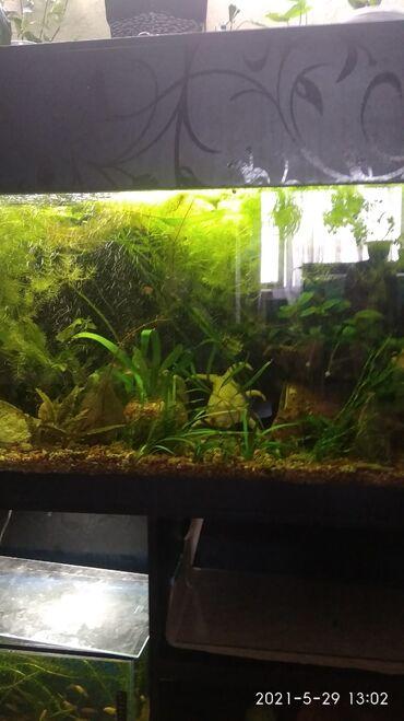 Возможна рассрочка!Продается аквариум почти 300 литров с тумбой и