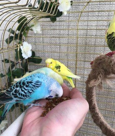 Попугаи красивых цветов разных возрастов