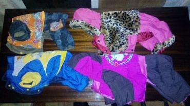 Продаются одежду для собак. Размеры 16 и 18.Цена 400-600 сом.т.. в Бишкек