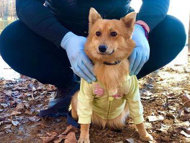Чудесная собачка привита стерилизована готова на пристройство