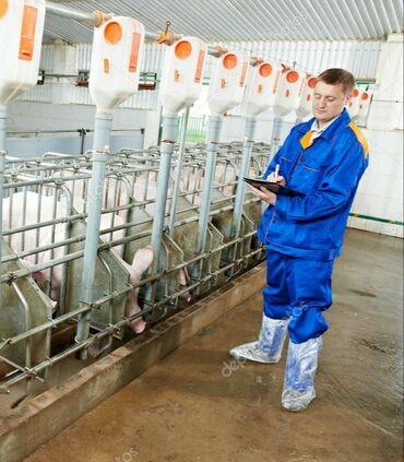 volkswagen 1 6 в Ак-Джол: Ищу семью с проживанием на свиноферму
