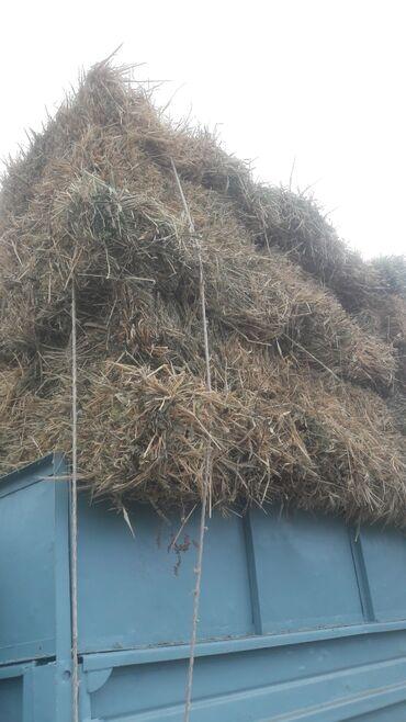 Животные - Заря: Подпокровный сено тюк 220 сом