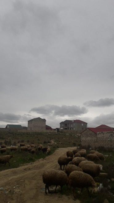 Bakı şəhərində Yeni suraxani qesebesinde senedli torpaq saheleri satilir. Notarial