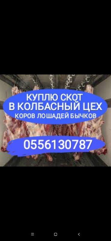 животн в Кыргызстан: Покупаю скот в любое время на забой в любой упитанности