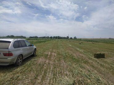 Аренда земельных участков в Бишкек: Аренда 1000 соток Для сельского хозяйства от собственника