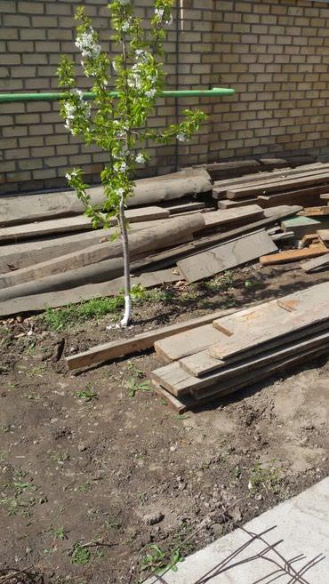 Продаю б/у лес . половые доски и другие в Бишкек