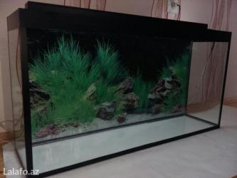Bakı şəhərində Teze akvarium 1metrelik
