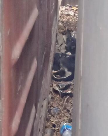 88 объявлений   ЖИВОТНЫЕ: Здравствуйте, вот такая собачка есть на Юге-2, родила недели две