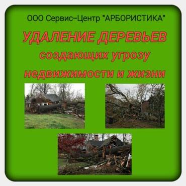 Удаление деревьев создающих угрозу недвижимости и жизни в Бишкек