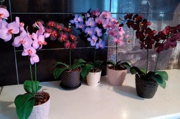 Цветы На заказ,из фоамирана орхидеи,сделаны своими руками. в Кок-Ой