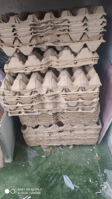 Молочные продукты и яйца - Кыргызстан: Молочные продукты и яйца
