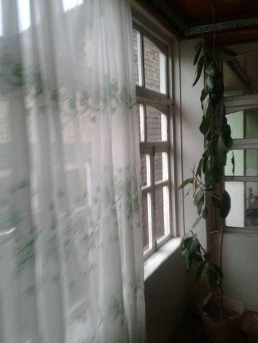 Гули Фикус гули хонаги 8-сола в Душанбе