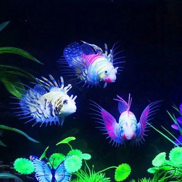 Bakı şəhərində Akvarium üçün fosforlu silikon balıq fiqurları