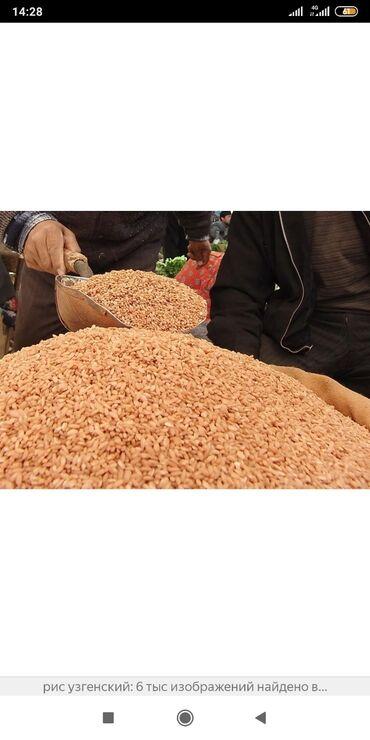 Оптом продаём узгенский рис для плова!!!