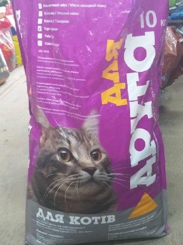 усыпление кошек в Кыргызстан: Корм для кошек10 кг