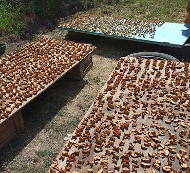 17 объявлений: Продаю Сушеные Яблоки (Алма Как) экологически чистый продукт без черве