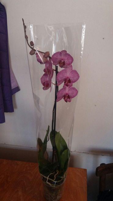Комнатные растения в Кок-Ой: Комнатные растения в наличии и на заказ. цветы игрушки открытки наш а