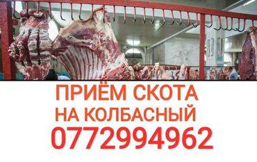 вакцины для животных в Кыргызстан: Куплю скот и вынужденый забой скота в колбасный цехлюбой упитанности и