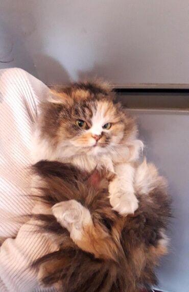 Отдам котят в хорошем руки Срочно !В туалет выйдет на улицу Пародия