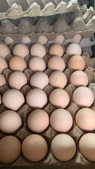 Продаю яйца домашние с доставкой с.Новопокровка .Обращаться по моб