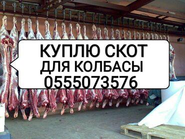 Куплю скот и мясо в колбасный цех любой упитанности и возрастабез