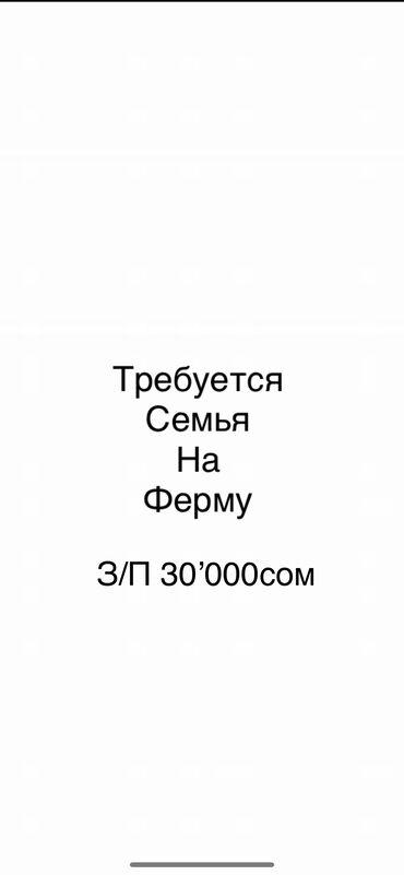торговый агент с личным авто бишкек в Кыргызстан: Требуется семья на ферму,  Рабочие по уходу за скотом, Малчы, жардамчы