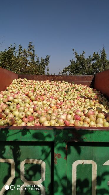 131 объявлений: Овощи, фрукты