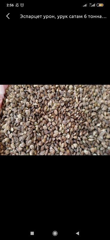 34 объявлений: Продаю семена эспарцета.Отличного качества.В количестве 6 тонн.Адресс